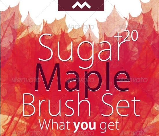 sugar-maple-brush