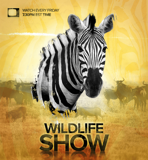 design-a-professional-wildlife-tv-show-poster